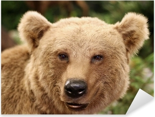 cute face of a brown bear in the middle of the forests Pixerstick Sticker