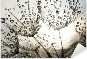 Dandelion seeds with dew drops Pixerstick Sticker