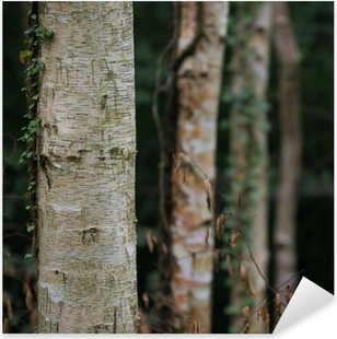 dark birch tree forest Pixerstick Sticker