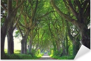 Pixerstick Sticker Dark Hedges bomen