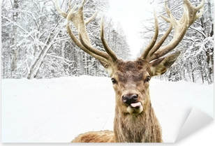 Deer with beautiful big horns on a winter country road Pixerstick Sticker