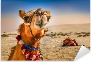 Pixerstick Sticker Detail van het hoofd van de kameel met grappige expresion