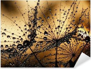 Dew drops on dandelions Pixerstick Sticker