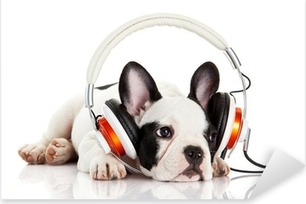 dog listening to music with headphones isolated on white backgro Pixerstick Sticker