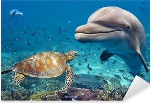 dolphin and turtle underwater on reef Pixerstick Sticker