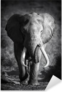Elephant Bull (Artistic processing) Pixerstick Sticker