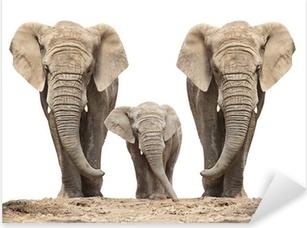 Sticker Pixerstick Éléphant d'Afrique (Loxodonta africana) de la famille sur un fond blanc.