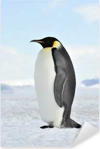 Sticker Pixerstick Empereur pingouin