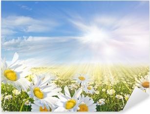 Sticker Pixerstick Eté: Champ de fleurs de marguerite avec le ciel bleu et les nuages