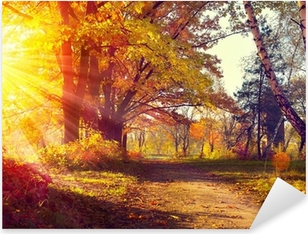 Fall. Autumnal Park. Autumn Trees and Leaves in sun light Pixerstick Sticker