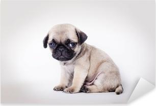 Fawn puppy pug sitting Pixerstick Sticker