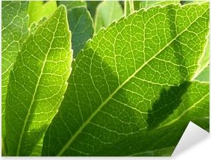 feuilles et ombres Pixerstick Sticker