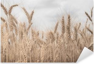 Field of wheat toned in sepia Pixerstick Sticker