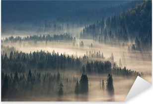 fir trees on a meadow down the will to coniferous forest in foggy mountains Pixerstick Sticker