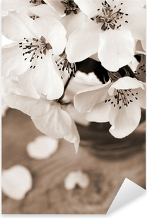 Flower of apple tree, processed in vintage sepia color Pixerstick Sticker