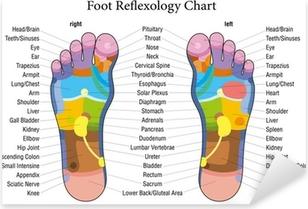 Foot reflexology chart description Pixerstick Sticker