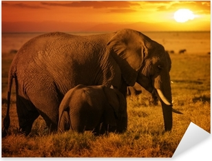 Forest elephant with her calf at sunset Pixerstick Sticker