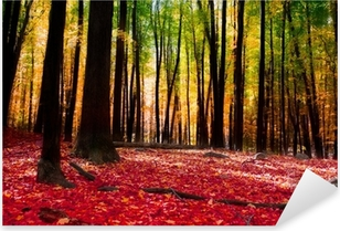 Forest in autumn with golden light Pixerstick Sticker
