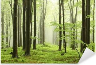 Sticker Pixerstick Forêt de hêtres au printemps dans les montagnes