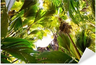 Sticker Pixerstick Forêt tropicale dans la Vallée de Mai, Praslin, Seychelles