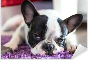 Pixerstick Sticker Franse bulldog slapen op het tapijt