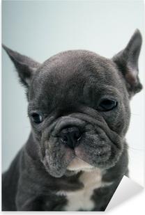 French Bulldog Puppy Portrait Pixerstick Sticker