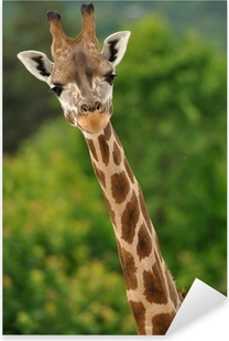 Giraffe head with neck Pixerstick Sticker