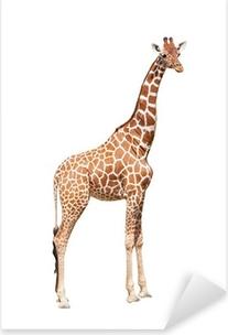 Pixerstick Sticker Giraffe tot het uiterste. Het is geïsoleerd op de witte