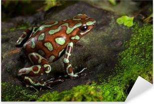 golden poison dart frog Pixerstick Sticker