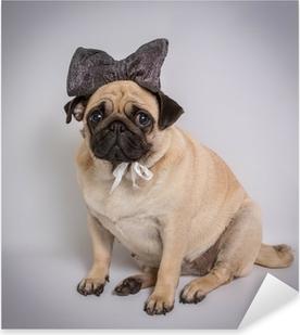 Pixerstick Sticker Grappige Pug / Grappige Pug op witte achtergrond