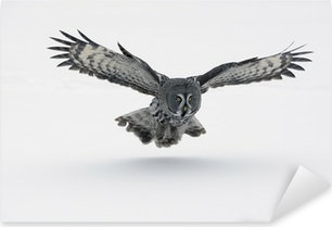 Great-grey owl, Strix nebulosa Pixerstick Sticker