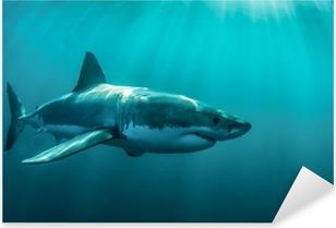 Great white shark underwater. Pixerstick Sticker