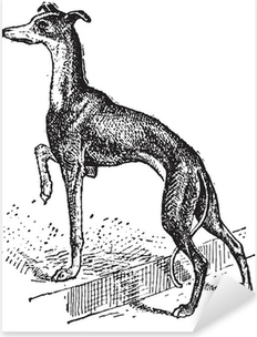 Greyhound, vintage engraving Pixerstick Sticker
