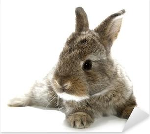 Pixerstick Sticker Grijs konijn bunny baby geïsoleerd op witte achtergrond