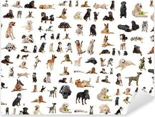 Pixerstick Sticker Groep van rashonden