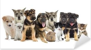 group of pets Pixerstick Sticker