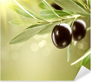 Growing Olives. Black Ripe Olive on a Tree Pixerstick Sticker