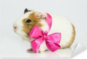 Guinea pig in a gift. Pixerstick Sticker