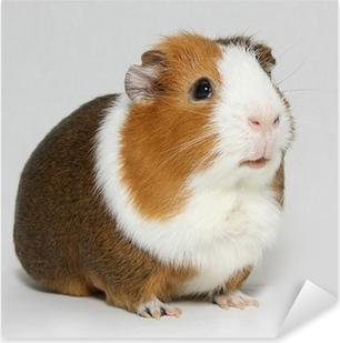 Guinea pig Pixerstick Sticker