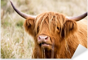 Highland Cow Pixerstick Sticker