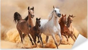 Horses in sand dust Pixerstick Sticker
