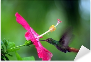 Humming Bird Pixerstick Sticker