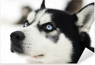 Husky portrait Pixerstick Sticker