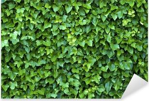 ivy wall Pixerstick Sticker