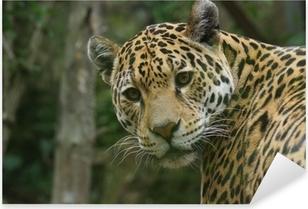 Jaguar - Panthera onca Pixerstick Sticker
