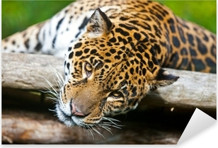 Jaguar - Panthera onca Pixerstick Sticker