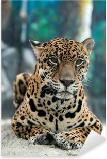 jaguar ( Panthera onca ) Pixerstick Sticker