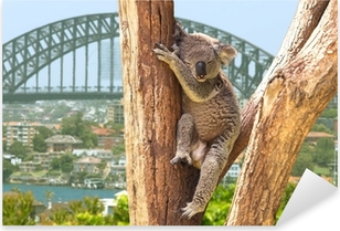 Sticker Pixerstick Koala mignon à Sydney, Australie