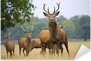 Pixerstick Sticker Kudde edelherten herten en doet in de herfst Herfst weide