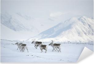 Pixerstick Sticker Kudde rendieren (Arctic)